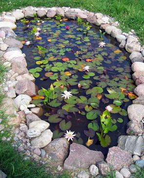 Пруд, водные растения